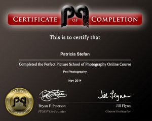 Pet Photography Certificate
